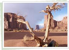 枯れ木アングル