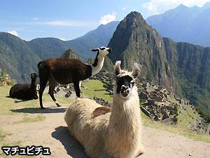 ペルー, 観光, 旅行, マチュピチュ ラマ